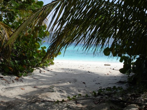 Guana-Island-beach-480x360